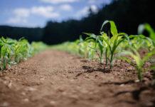 Jak chronić nasze rośliny